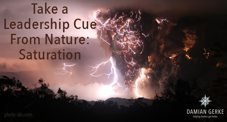 Take a Leadership Cue From Nature: Saturation