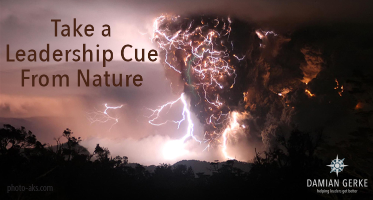 Take a Leadership Cue From Nature: Series Intro